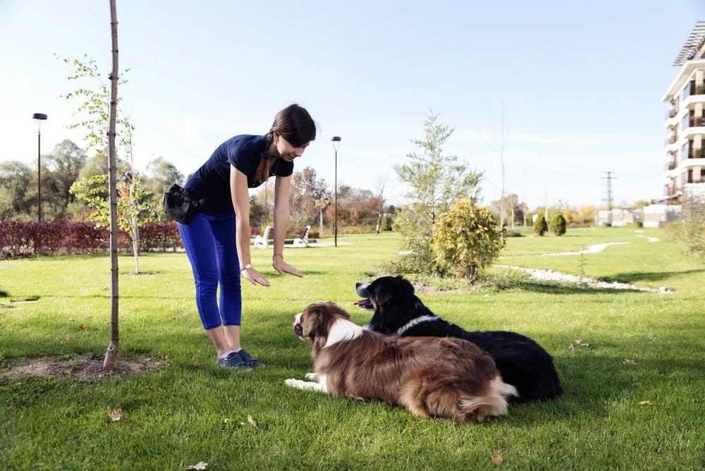 Pet Discipline
